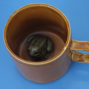 frog in a mug not ww